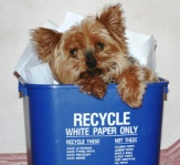 """The 4 R's: Reduce, Reuse, Recycle, Ruff"" was one of the 2012 contest entries."
